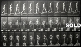 Muybridge - Animal